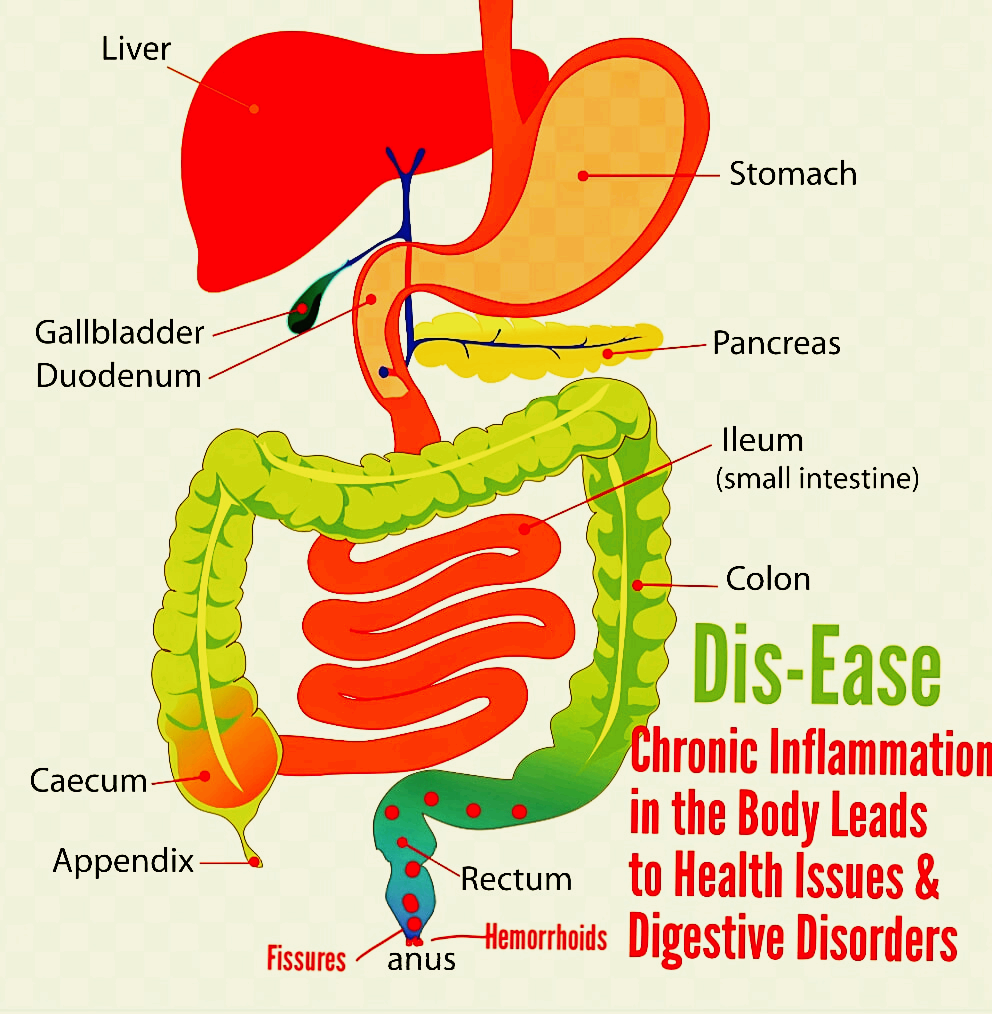 Digestion tract diagram anal fissure hemorrhoids and stomach